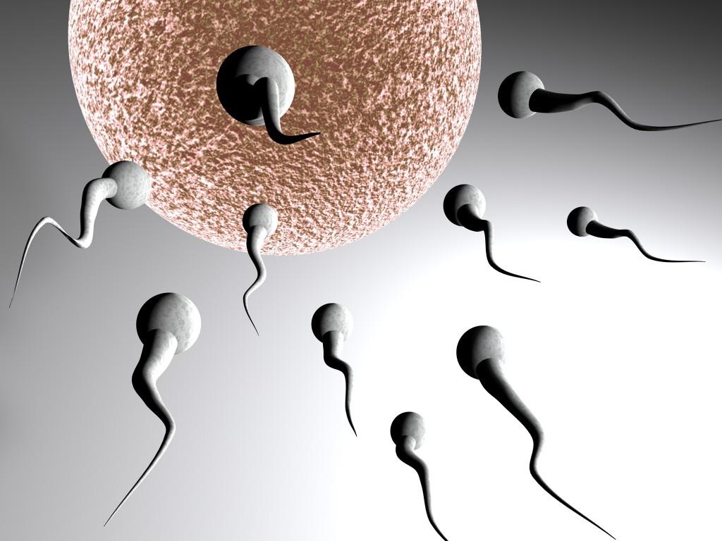 Date ovulation